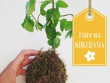 Comment faire un kokedama